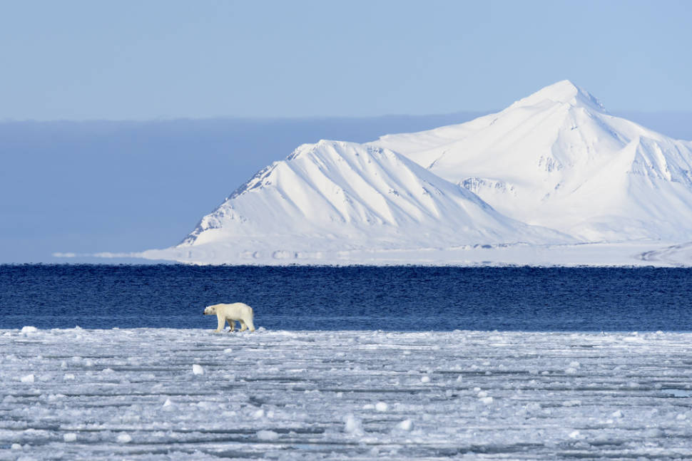 Best time for Polar Bear Watching in Svalbard