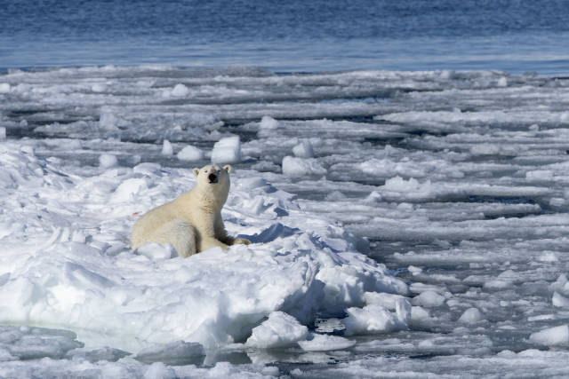 Best time to see Polar Bear Watching in Svalbard