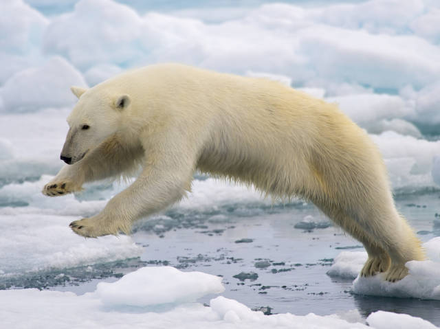 Polar Bear Watching in Svalbard - Best Time