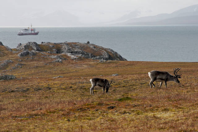 Best time for Reindeer in Svalbard