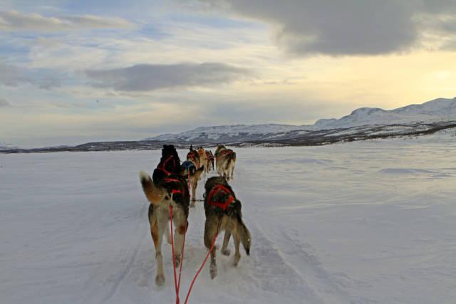 Best time for Dogsledding in Swedish Lapland in Sweden