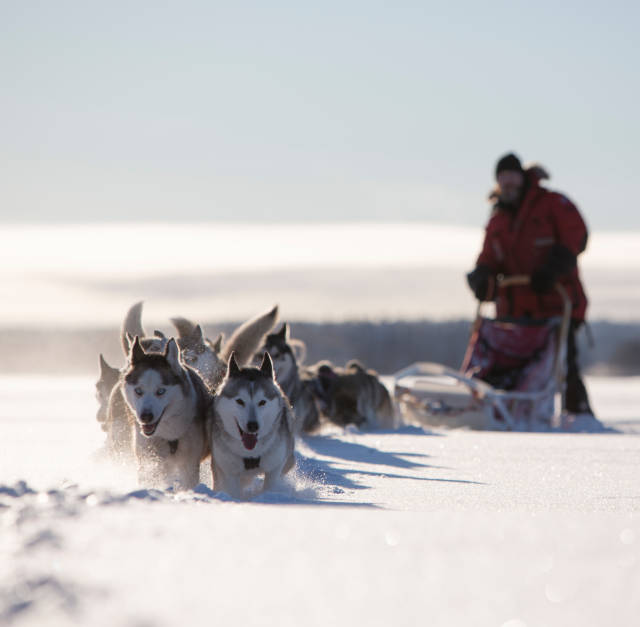 Dogsledding in Swedish Lapland in Sweden - Best Time