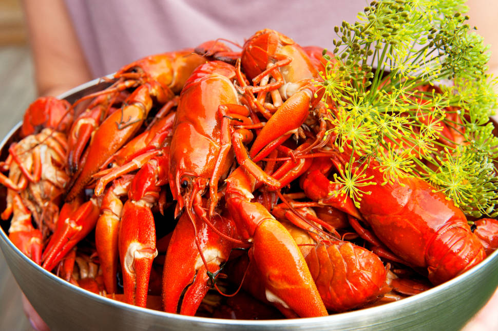 Best time for Kräftskiva: Crayfish Party in Sweden