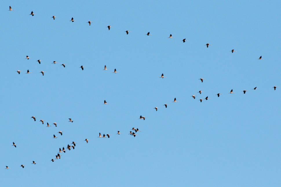 Best time for Migrating Birds at Falsterbo in Sweden