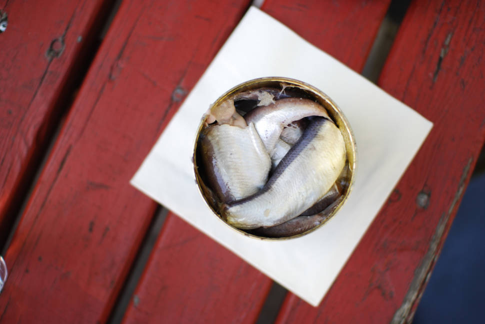 Best time for Surströmming or Sour Herring in Sweden