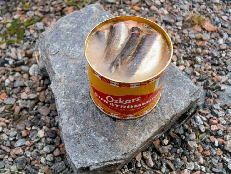 Surströmming or Sour Herring in Sweden - Best Season