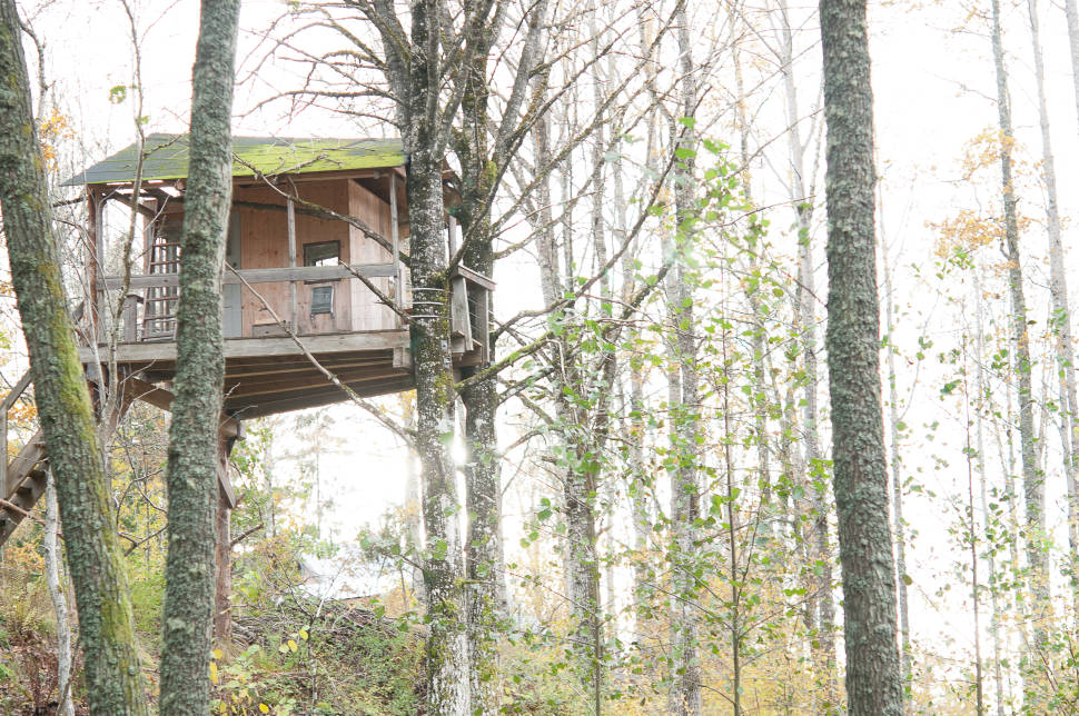 Tree House Hotel in Sweden - Best Season