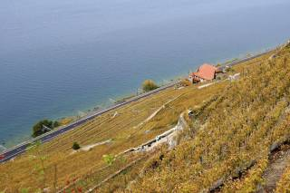 Grape Harvest and Wine Season