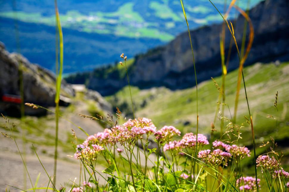 Summer in Switzerland - Best Time