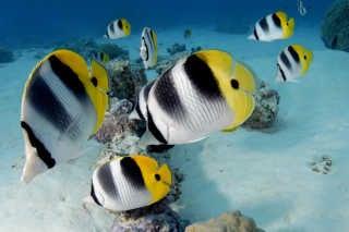 Diving and Snorkeling around Tahiti
