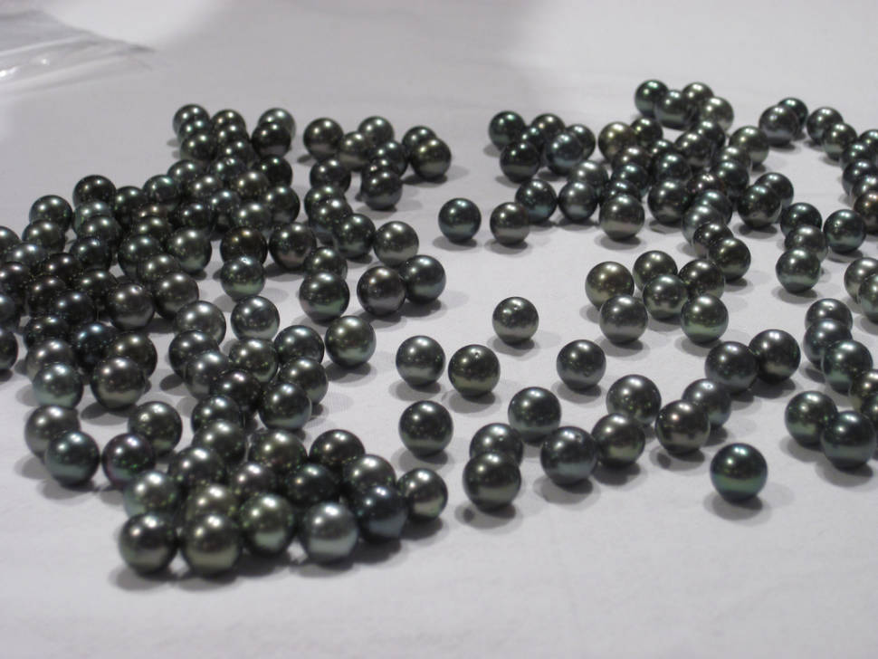 Tahitian Pearl Harvest in Tahiti - Best Time