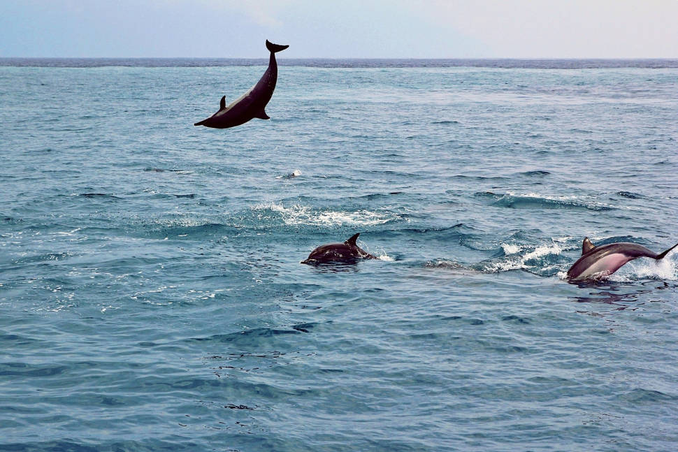 Dolphin and Whale Watching in Taiwan - Best Season