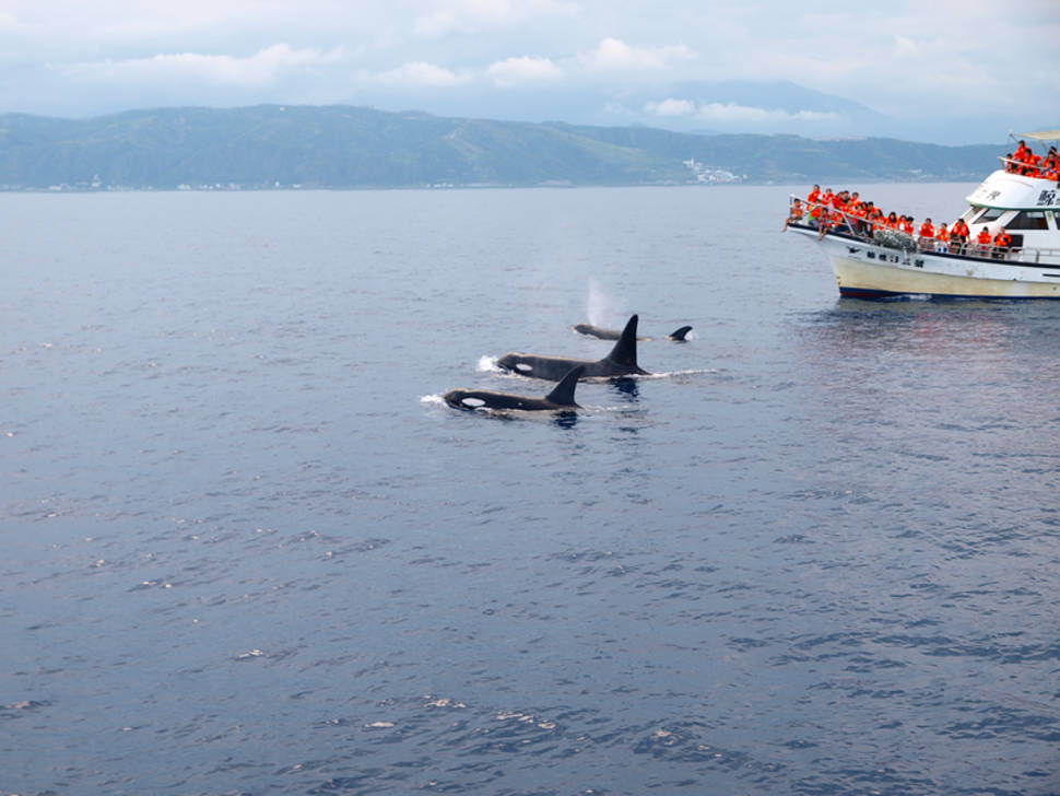 Dolphin and Whale Watching in Taiwan - Best Time