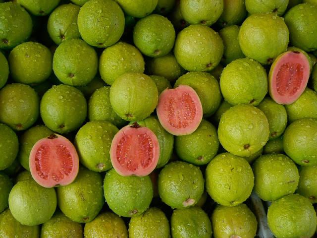 Guava in Taiwan - Best Season