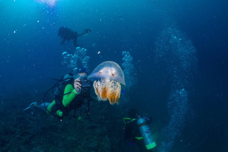 Scuba Diving and Snorkeling in Taiwan - Best Time