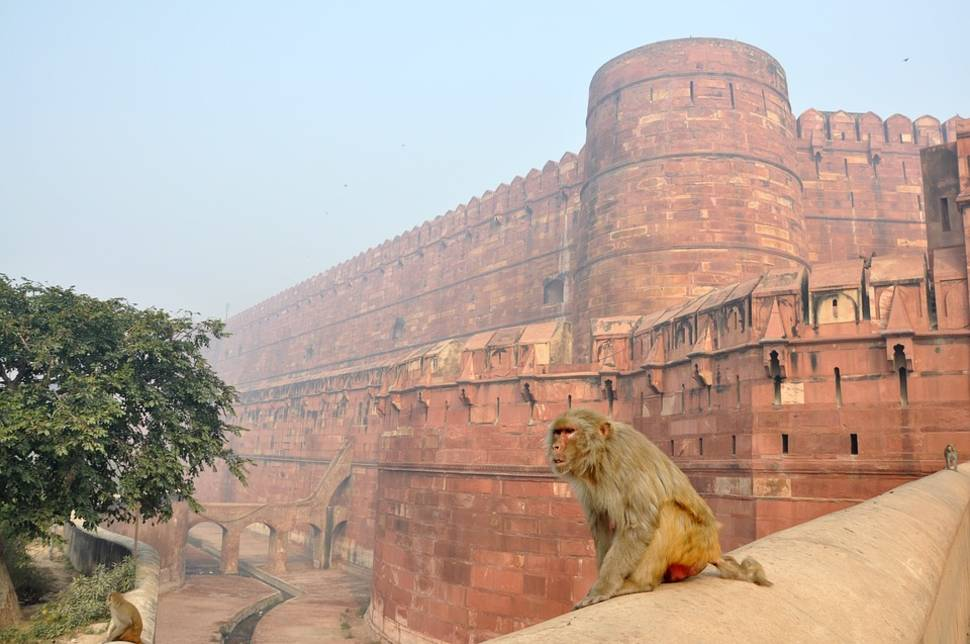 Best time for Agra Fort in Taj Mahal and Agra