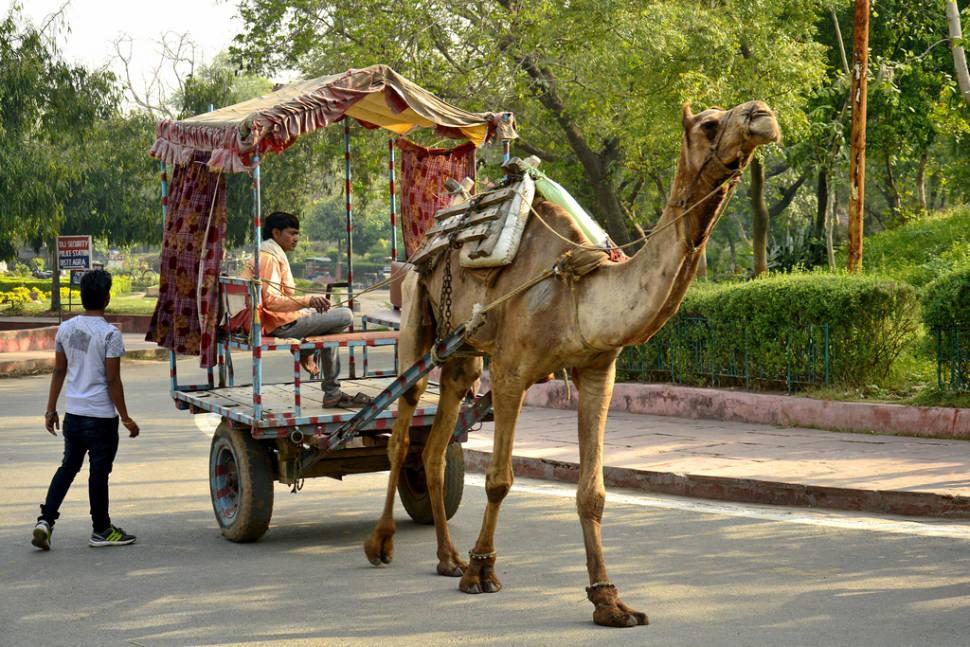 Visiting Paliwal Park in Taj Mahal and Agra  - Best Time