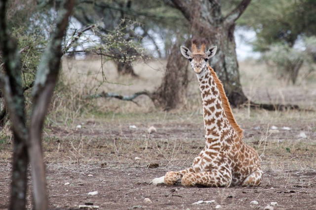Short Dry Season in Tanzania - Best Season
