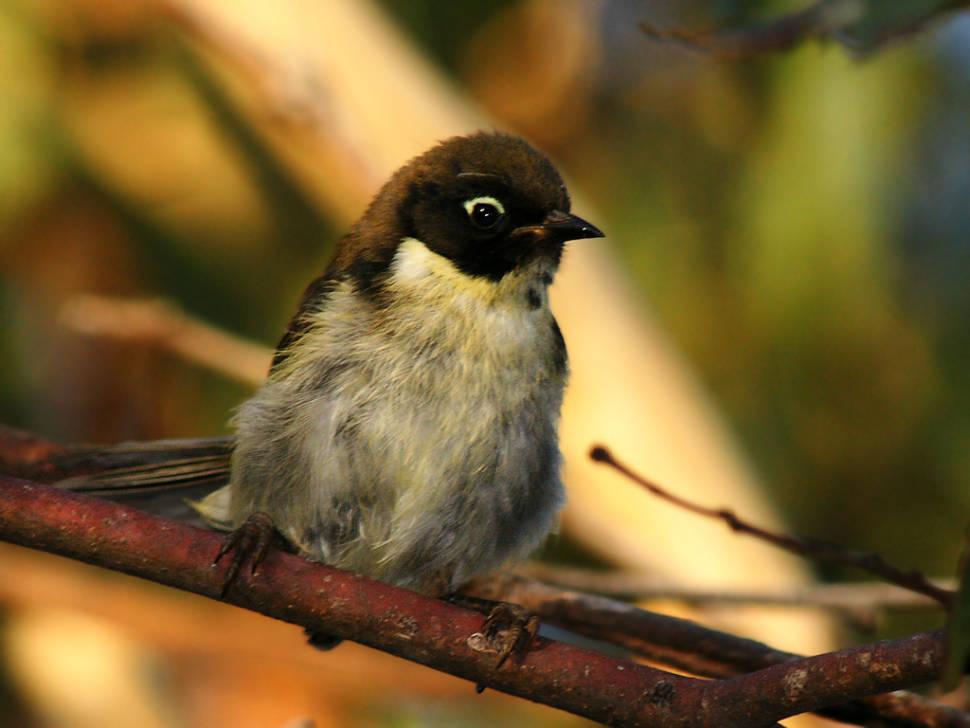 Birdwatching in Tasmania - Best Time