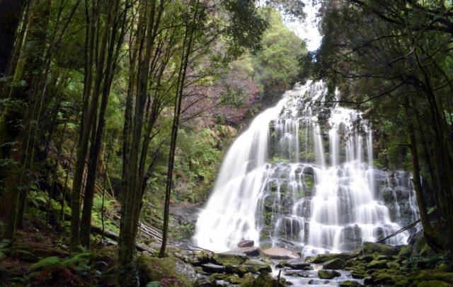 Nelson Falls at Best in Tasmania - Best Time