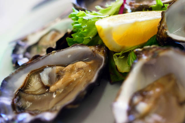 Pacific Oysters in Tasmania - Best Time
