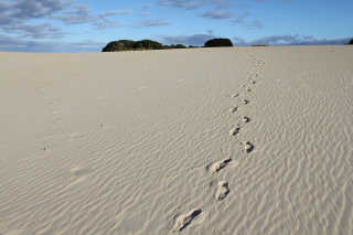 Sandboarding Season