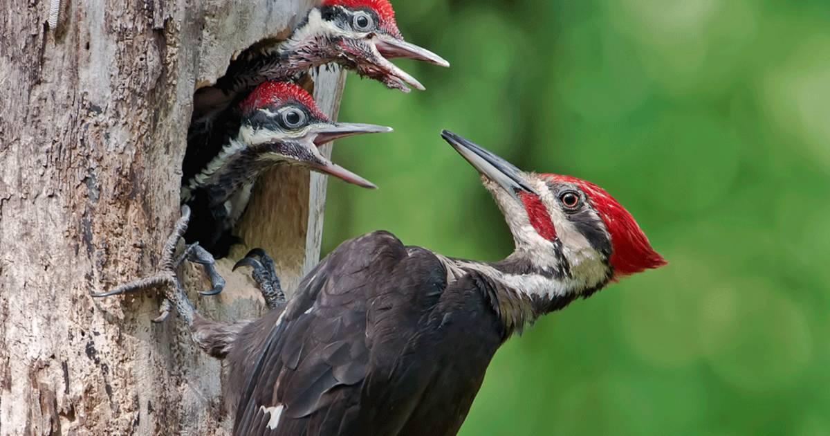 Birdwatching in Texas - Best Time
