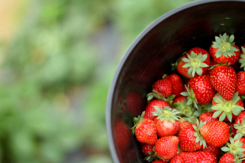 Strawberry Season in Texas - Best Time