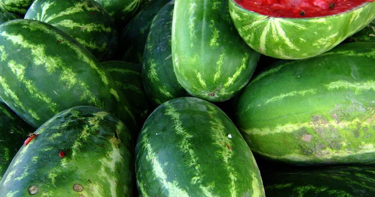 Watermelon in Texas - Best Time