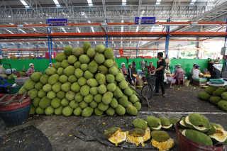 Jackfruit Season