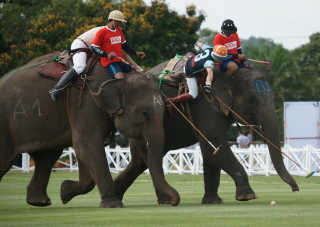 King's Cup Elephant Polo