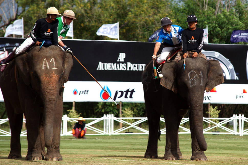 King's Cup Elephant Polo in Thailand - Best Season
