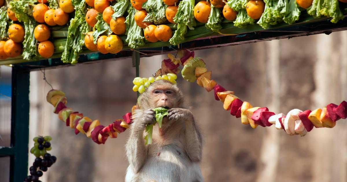 Lopburi Monkey Banquet Festival in Thailand - Best Time