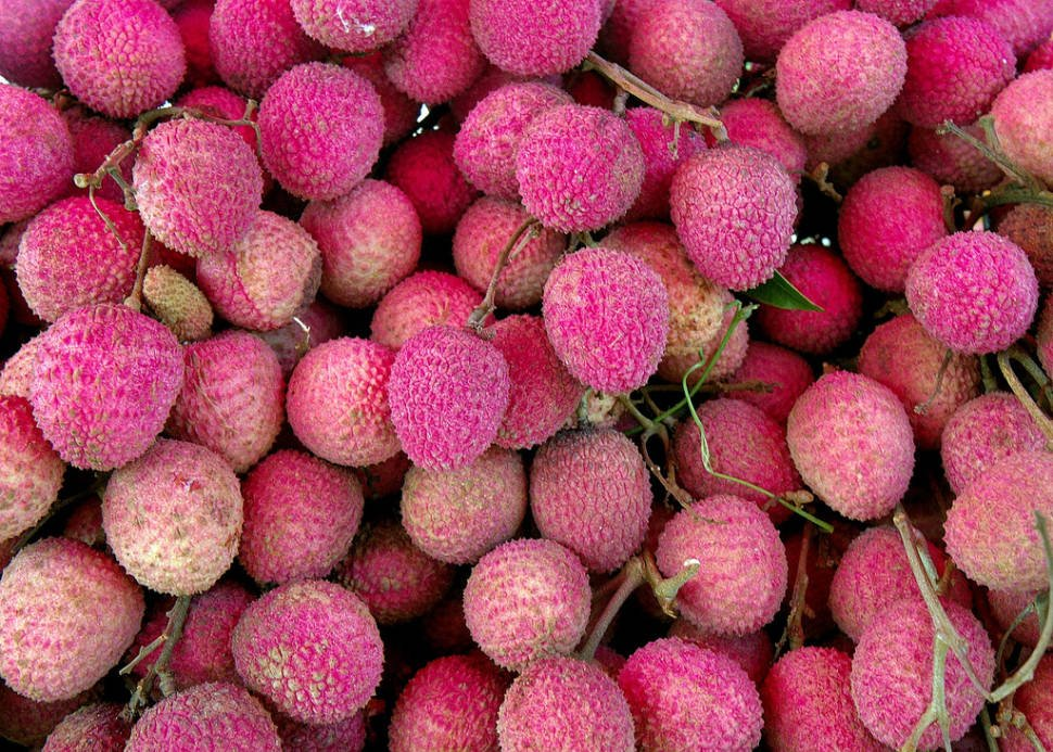 Lychee or Litchi Season in Thailand - Best Time