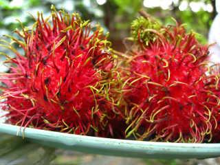 Rambutan Season