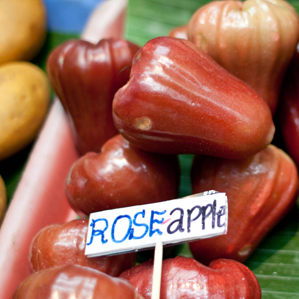 Rose Apple Season in Thailand - Best Season