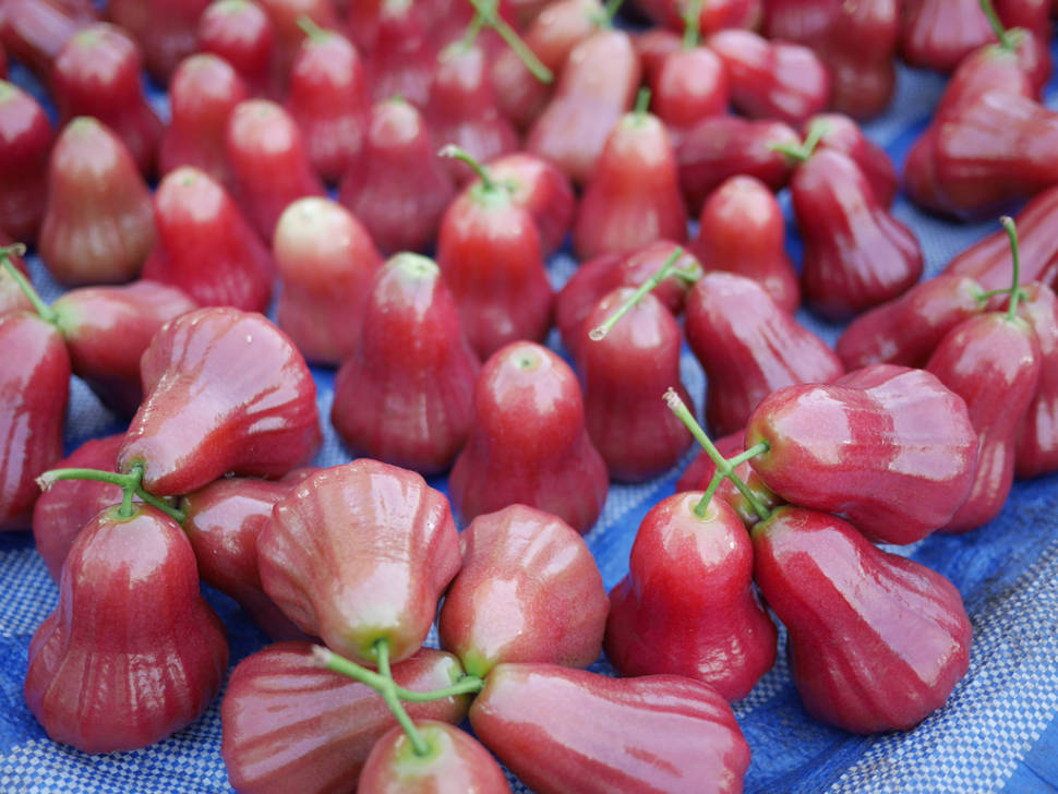Rose Apple Season in Thailand - Best Time