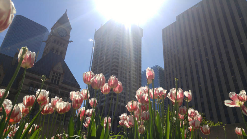 Spring in Toronto - Best Time