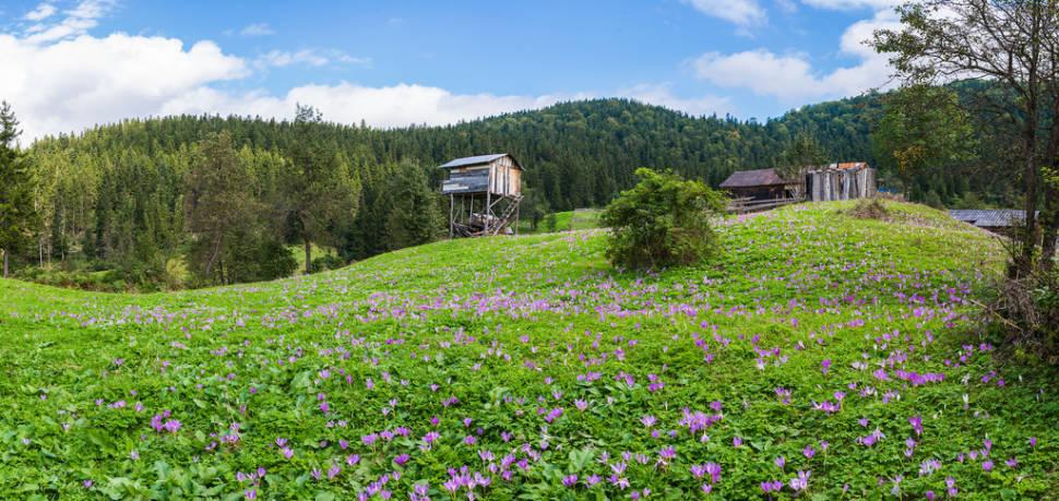 Kalınçam Mh. Tonya, Trabzon, Turkey
