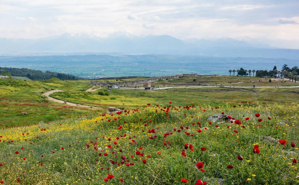Wildflowers in Turkey - Best Time