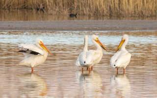 Migratory Bird Watching