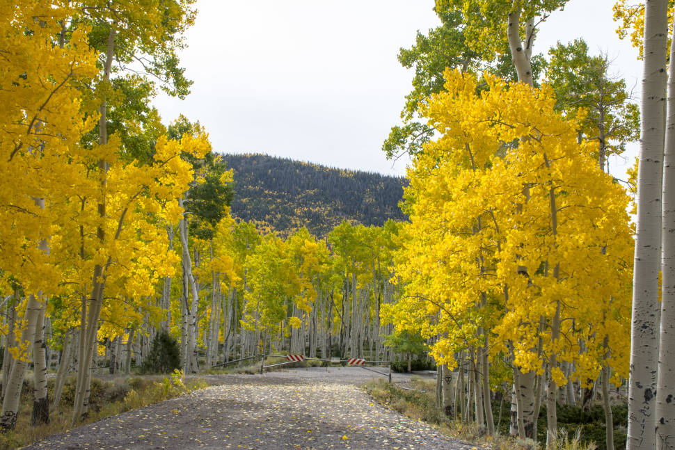 Best time for Pando, the Trembling Giant in Utah