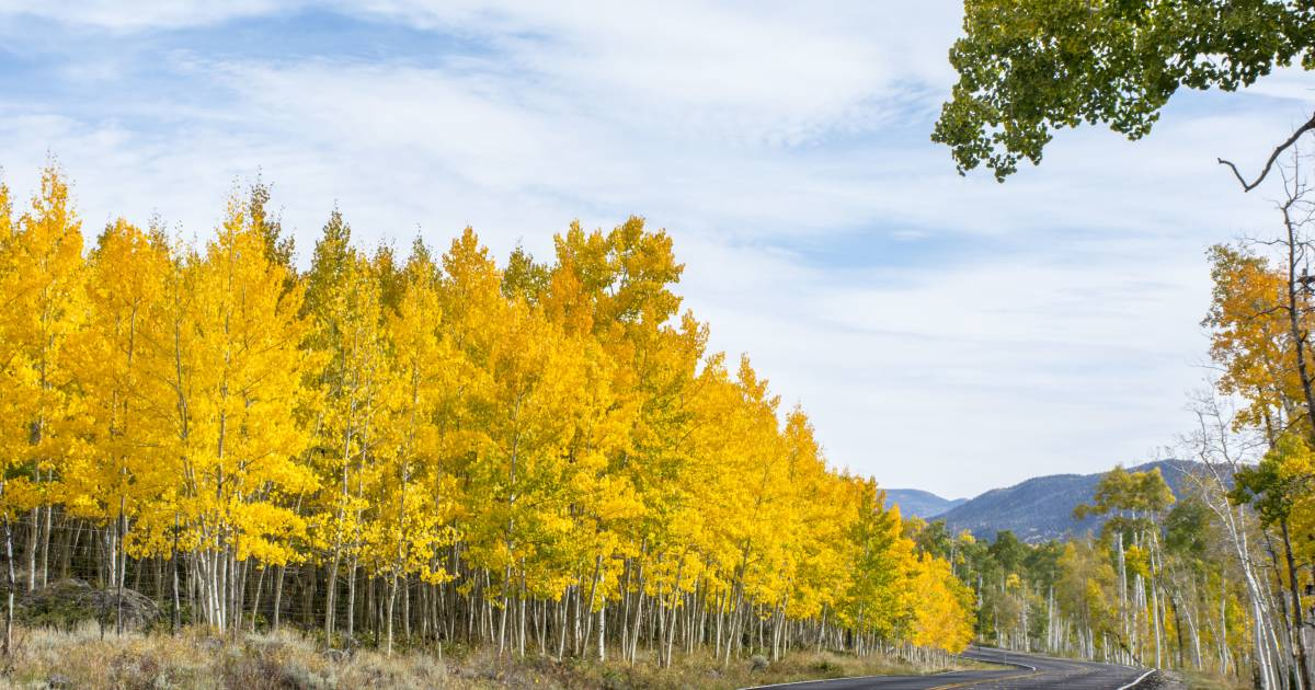Pando, the Trembling Giant in Utah - Best Time
