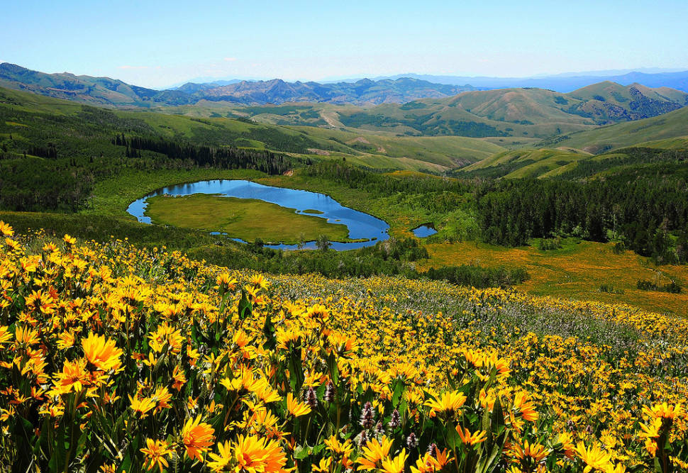 Best time for Wildflowers of Uinta-Wasatch-Cache National Forest in Utah