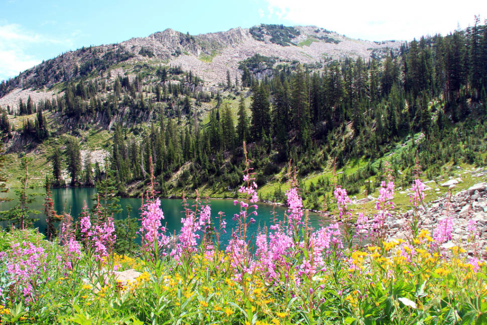 Wildflowers of Uinta-Wasatch-Cache National Forest in Utah - Best Time