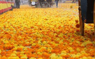 Battle of Flowers