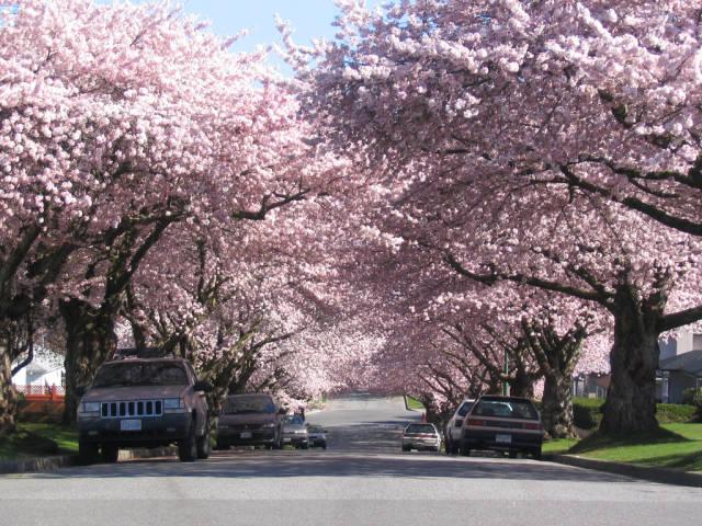 Spring in Vancouver - Best Season