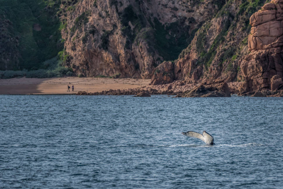 Best time for Whale Watching in Victoria in Victoria