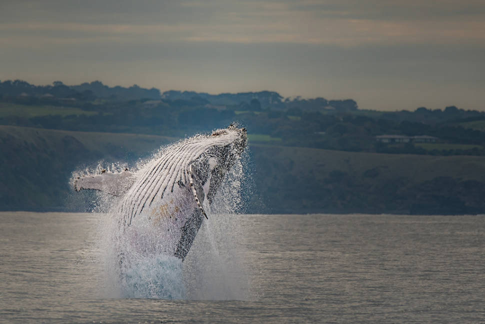 Whale Watching in Victoria in Victoria - Best Time