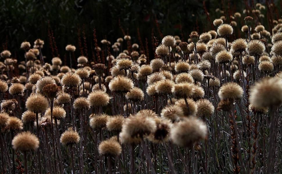 Wildflowers near Ropers Lookout